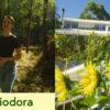 TheEcoShow_s01e01_Melliodora_Thumbnail